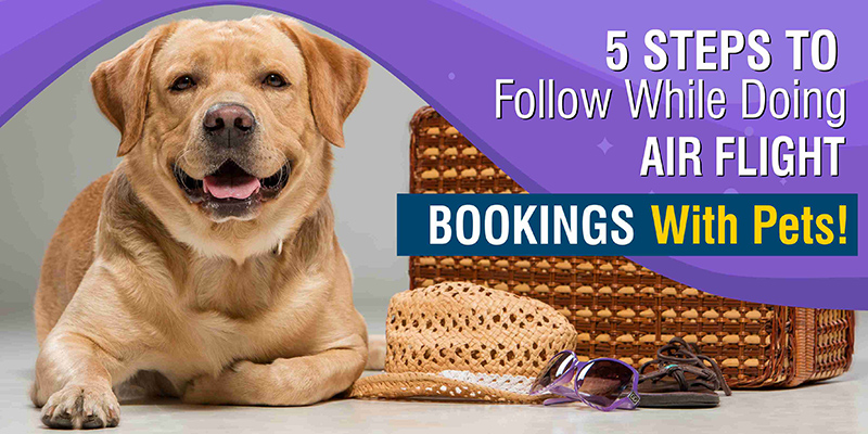 5 Steps To Follow While Doing Air Flight Bookings With Pets!