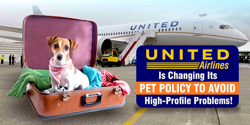 United Airlines Is Changing Its Pet Policy To Avoid High Profile