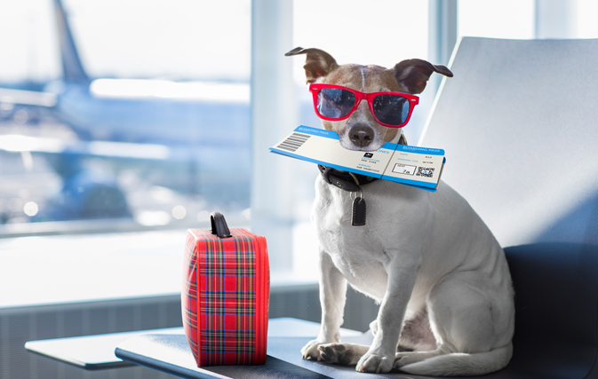 Do You Know About The Most Pet Friendly Airlines?